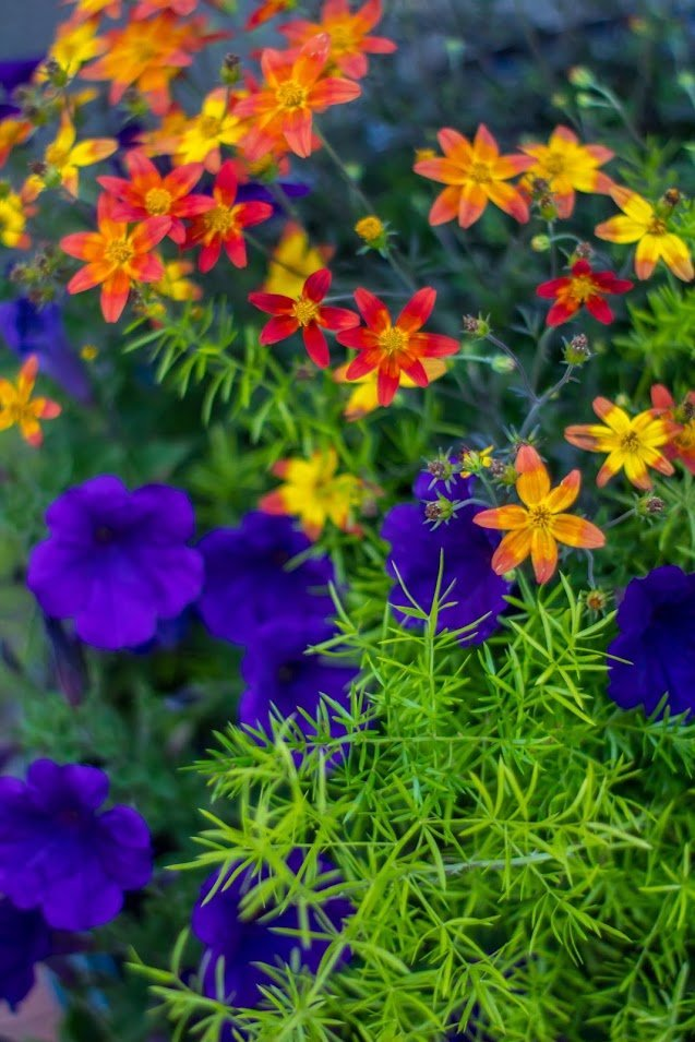 colorful floral Arrangment in our gardens